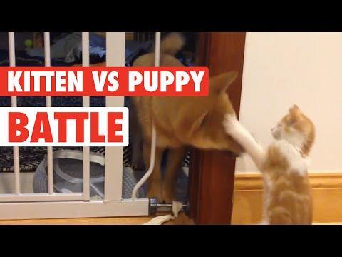 Puppy Vs Kitten: Battle For Adorable
