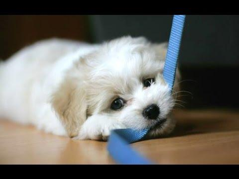 Funny Dogs Chasing Their Own Leash Compilation