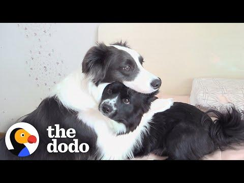 This Dog Won't Leave Her Little Brother's Side When He's Sick #Video