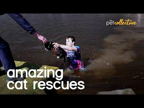 Amazing Cat Rescues Video