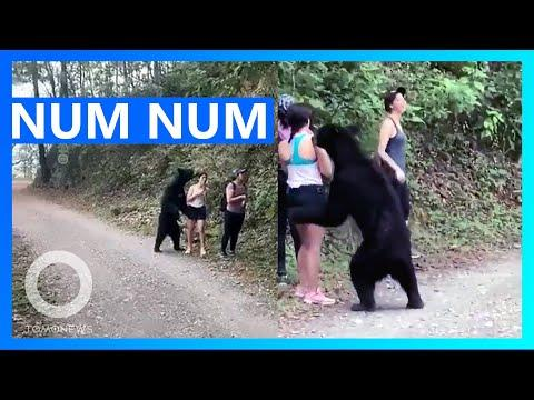 Curious Black Bear surprises 3 women Hikers in Mexico Video
