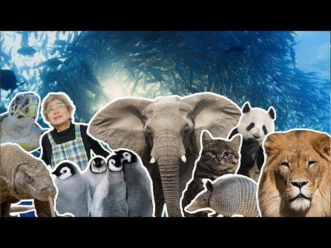 Best Moments of 2018 | BBC Earth