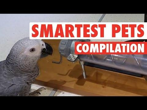 Super Smart Pets Compilation