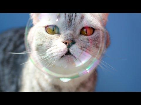 Image of: Falling Asleep Funny Cats And Kittens Playing With Bubbles Funny Cat Videos 2018 Send To Friend Mels Video Of The Day Funny Cats And Kittens Playing With Bubbles Funny Cat Videos 2018