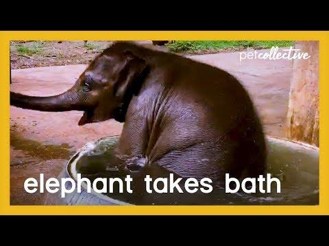 Baby Elephant Takes A Bath Video