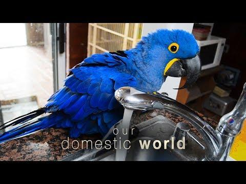 Our Domestic World: Pets Explore The Kitchen & The Backyard