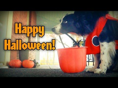 Nana The Border Collie Goes Trick Or Treating