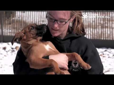 Puppies Love Snow!