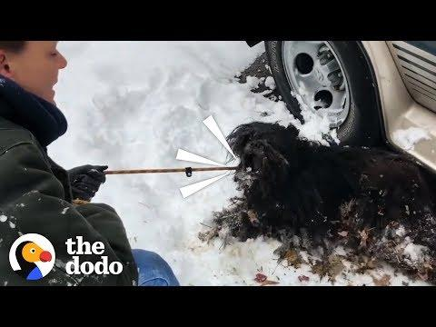 Severely Matted Dog Gets Rescued from a Blizzard    The Dodo