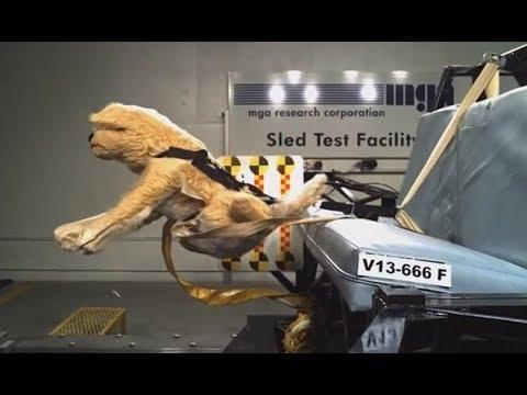 Crash Test For Dogs. Your Daily Dose Of Internet