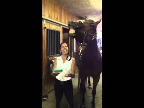 Horse Blows Out His Birthday Candles!