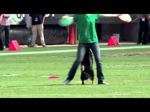 Incredibly Talented Dogs - Eagles Halftime Show