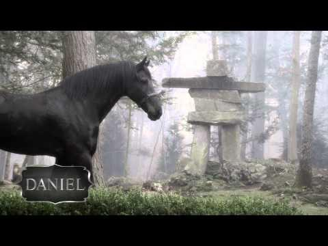 Meet Five Friesian Horses | Elegant And Beautiful In 1080p HD