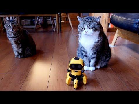 Assembly robot and Maru and Hana