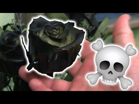 Dead Flower Society - Texas Country Reporter Video