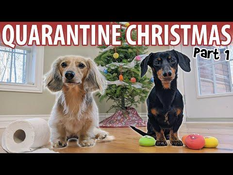 QUARANTINE CHRISTMAS VIDEO - Cute Dachshunds Get Ready for The Holidays!