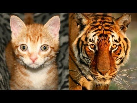 House Cats, Lions And Tigers, Oh My!