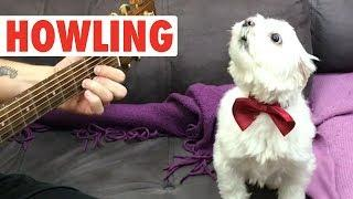 Howling Howlers | Funny Pet Video Compilation