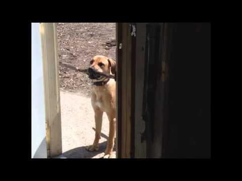 Dog's Stick Is Too Big To Fit Through The Door