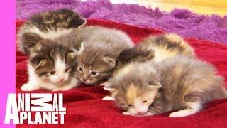 Five Orphaned Kittens Arrive At Their New Foster Home | Too Cute!