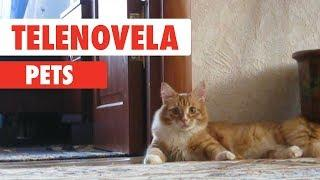 Telenovela Pets