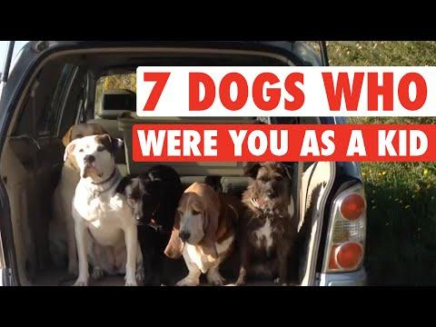 7 Dogs Who Were You As A Kid