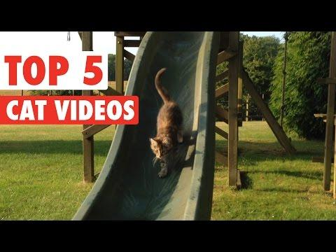 Best Of The Week Cats || Funny Kitten Compilation: March 18 2016