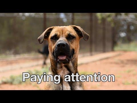 Advice On Relationships From The Love Dogtor Tip #2 - Pay Attention