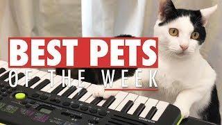 Best Pets of the Week | October 2017 Week 1