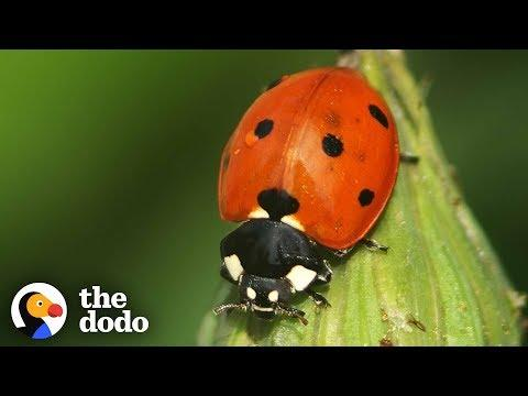 The Stunning Life Cycle Of A Ladybug