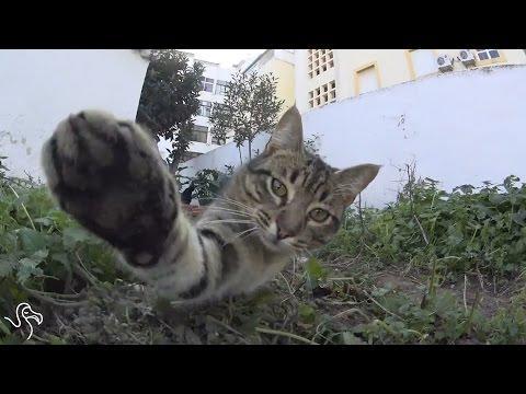 Cat Vs Camera