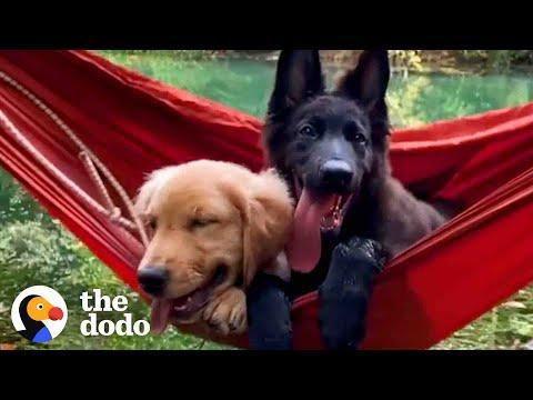 We Don't Deserve Dogs #Video