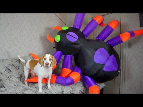Dog Vs. Giant Spider: Cute Dog Maymo