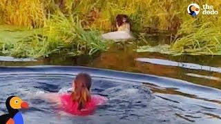 Grandma Jumps Into River To Rescue Sheep | The Dodo