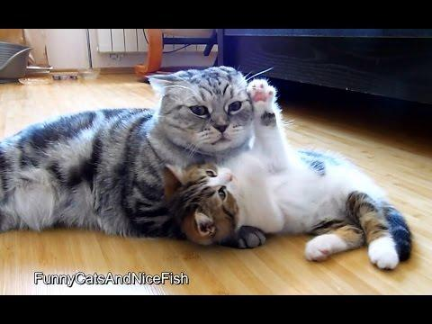 Kitten Wants Attention From Cat