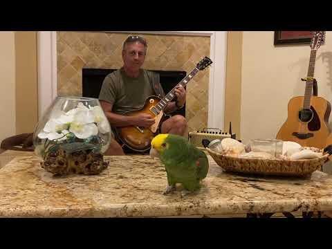 The Pretender Video