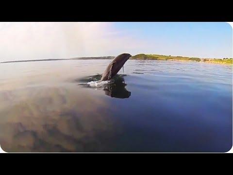 Dolphin Plays With Jet Skier | New Best Friends!