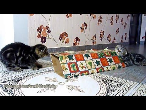 Cats And Kittens Playing While Waiting Christmas
