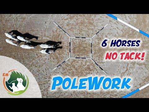 Pole Work Exercises with 6 Horses & No Tack!