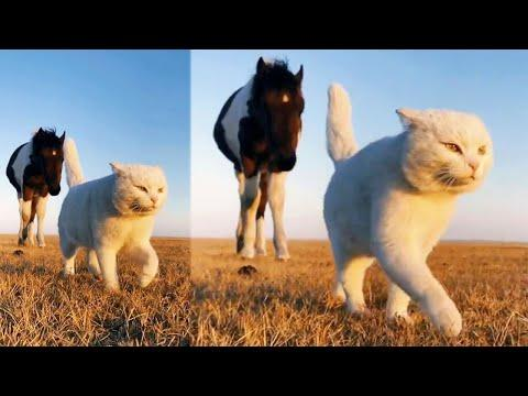 The Best Cat Walking Video Ever! #Video