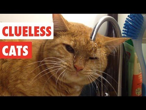 Clueless Cats | Funny Pet Video Compilation
