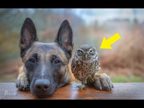 Gentle Giant Adopts This Tiny Rescue Owl And Warms Hearts Everywhere