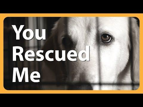 Heart Wrenching and Beautiful Dog Rescue - A Dog's Journey Home Music Video