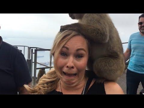 Funniest Animals Scaring People Reactions