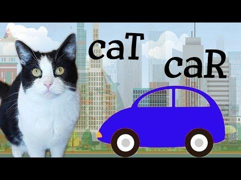 The CAR and the CAT Video - do we have common relatives?