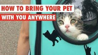 How To Bring Your Pet With You Everywhere