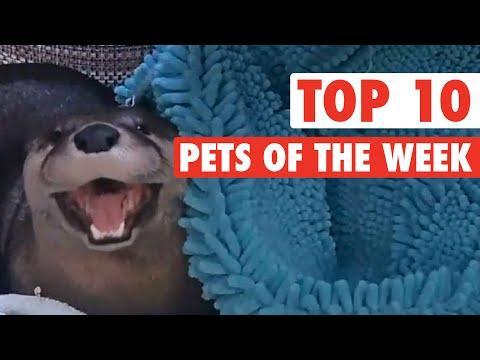 Top 10 Pets Of The Week!