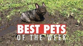 Best Pets of the Week | April 2018 Week 3