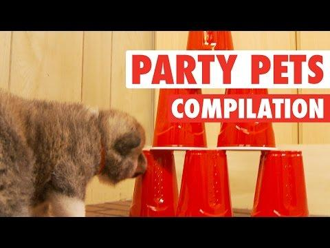 Party Pets (Animal Compilation)