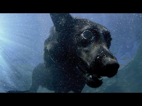 Underwater Dogs - Pets - Wild At Heart